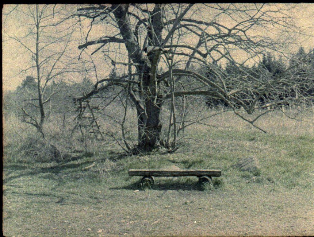 Pen EE-ต้นไม้ใหญ่