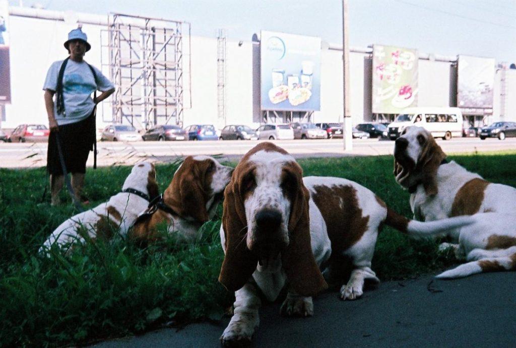 Hi Matic F-ภาพถ่ายสุนัข