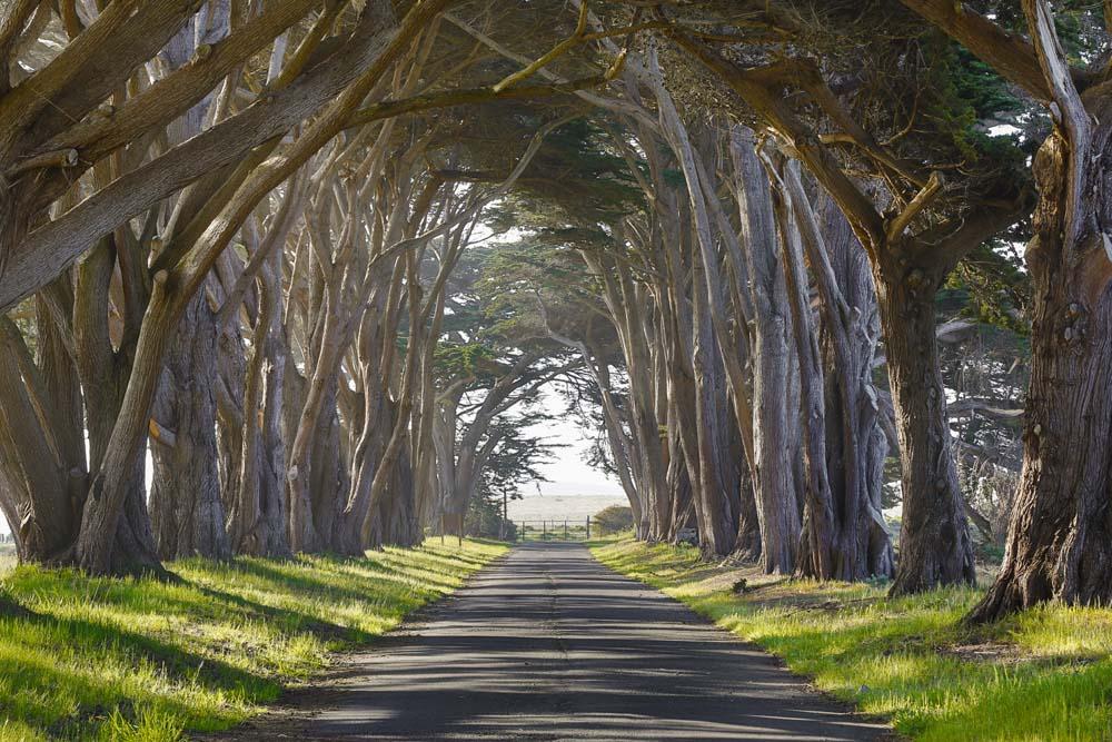 เคล็ดลับถ่ายภาพ-ต้นไม้ใหญ่